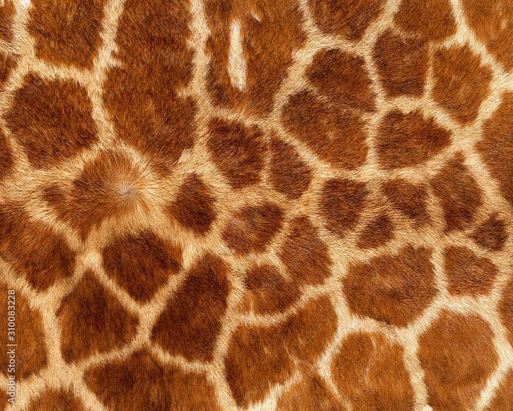 giraffe skin pattern texture repeating monochrome Texture animal prints background