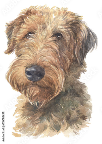 Water colour painting of Welsh Terrier 011 Wallpaper Mural
