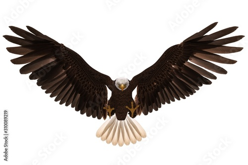 Obraz na plátně  Bald eagle flying isolated on white 3d illustration