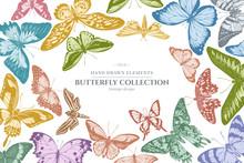Design With Pastel Colored Papilio Ulysses, Morpho Menelaus, Graphium Androcles, Morpho Rhetenor Cacica, Papilio Demoleus, Cethosia Biblis, Papilio Antimachus, Alcides Agathyrsus, Ornithoptera Priamus