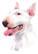 Water Colour Painting, White Dog Breed, Bull Terrier 059