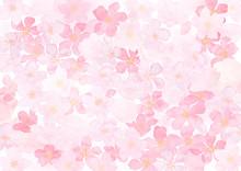 桜いっぱい 背景