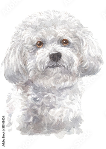 Photographie Water colour painting of Bichon Frise 086