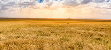 Game Drive With Safari Car In Serengeti National Park In Beautiful Landscape Scenery, Tanzania, Africa