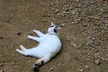 ねこ 三毛猫 のんび...