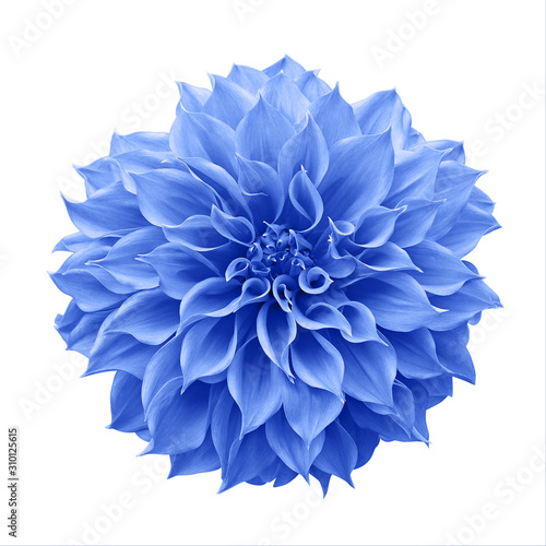 Fotografia Blue Dahlia flower the tuberous garden plant isolated on white background with clipping path, blue Dahlia is a symbol of a new beginning and a new chapter