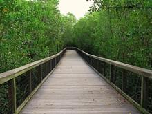 Natur Im Gordon River Greenway Park In Naples, Florida