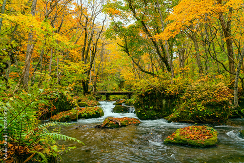 Photo Oirase River flow in the colorful foliage forest of autumn season
