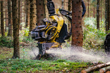 Forestry Harvester Cutting Trees In Pine Forest