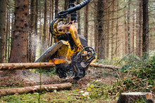 Forestry Harvester Cutting Tre...