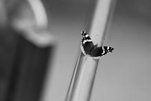 Papillon Ailes Ombre Lumière Barre Inox Noir Blanc Macro Proxy Nature Minimalisme