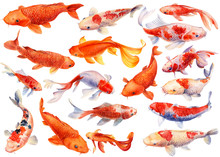 Set Of Koi, Carp Fish On An Isolated White Background, Watercolor Illustration, Hand Drawing