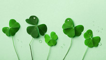 Saint Patricks Day Background With Green Shamrock Top View.