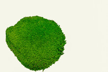 Green Moss Hummock On White Ba...