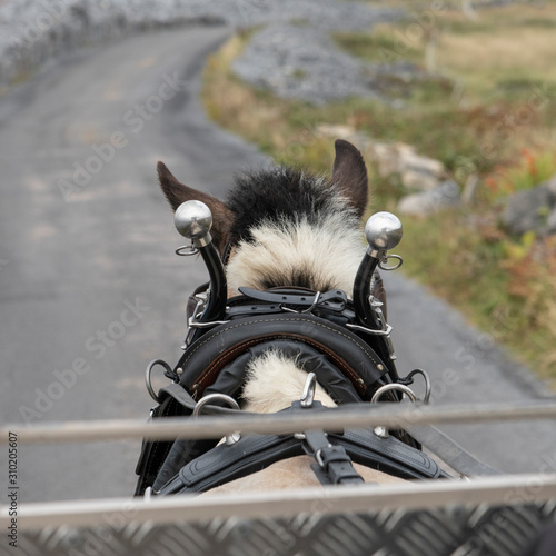 Back view of a horse pulling a carriage, Kilronan, Inishmore, Aran Islands, Coun Canvas Print