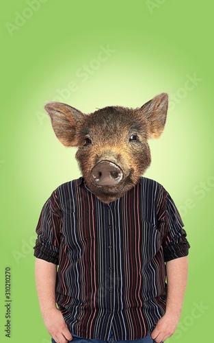 Fotografia, Obraz Overweight with pigs head