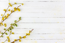 Spring Background Of Flowering Willow Twigs And Dogwood On White Wooden Background With Copy Space