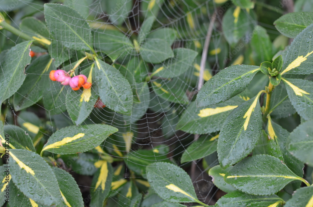 liście jesienne , kolory jesieni , kolorowe liście , liść jesienią