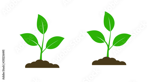 Seedling icon. Plant symbol. Sprout from the ground. Flat style