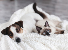 Cat And Dog Together Under Whi...
