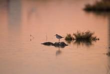 Small Bird Standing On A Rock ...