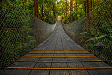 A Wooden Bridge In The Jungle Of Monteverde. Costa Rica