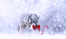 Christmas Portrait Of Fabulous Funny Grinning Gray Wolf Canis Lupus With Stolen Santa Claus Hat In Teeth, Candy Cane Lollipop, Winter Snow Background With Snowfall. Fantasy New Year Card, Snowy Forest