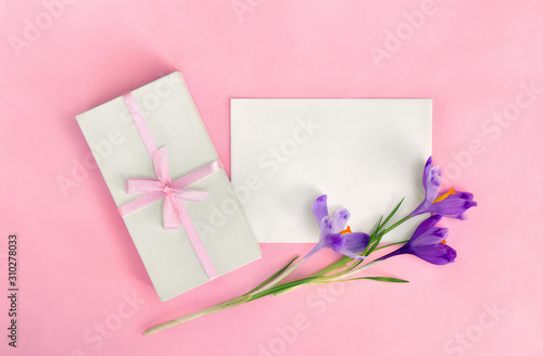 Fototapeta Holiday composition, white gift box with pink ribbon and blank sheet with space for text and flowers violet crocuses on pink paper background. Top view, flat lay obraz na płótnie