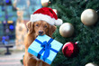 canvas print picture funny dog in santa hat holding a gift box in mouth in front of a christmas tree