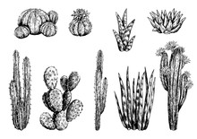 Hand Drawn Vector Illustration. Collection Of Different Varieties Of Cacti. Set Of Desert Plants. Vintage Botanical Sketches Isolated On White Decorative Monochrome Elements For Design, Typography Etc