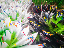 Brightly Colored Echeveria