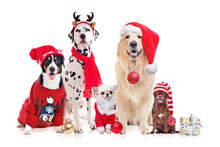 Group Of Dogs Wearing Christmas Costumes Isolated On White