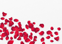Backdrop Of Rose Petals Isolated On A Transparent White Background. Valentine Day Background. Vector Illustration