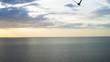 A bird flies over the sea