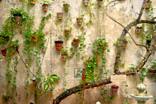 Indoor Garden Wall Adorned With Colorful Terracotta Flower Pots, Hanging Vines, Strings Of White Lights And The Thick Stem Of A Trained Vine. Old San Juan, Puerto Rico.
