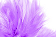 canvas print picture - Beautiful purple chicken feather texture abstract for background. soft and blur color