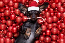 Christmas Santa Claus Dog And ...