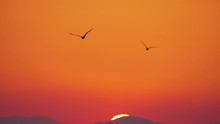 Flying Seagulls In Sunset Sky
