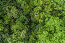 Lush Mystical Rainforest Aeria...