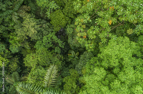 Lush mystical rainforest aerial drone view at La Fortuna Costa Rica jungle Canvas Print