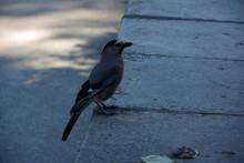 Bird On The Road