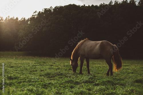 Horse grazing in meadow - 310384648