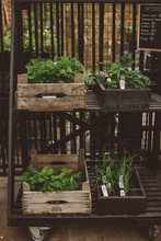 Plants In Crates