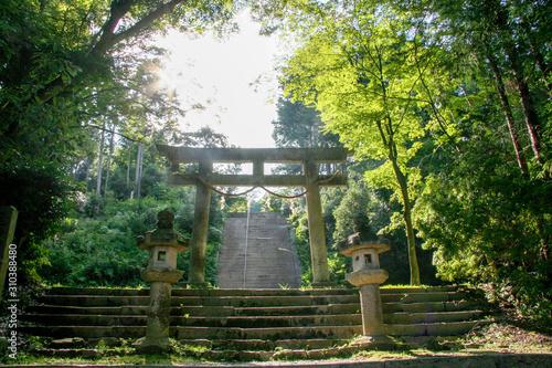 Obraz na plátně 神社の参道
