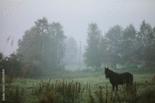 Horse in foggy meadow - 310389841