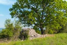Tree On Hill, Capitelle In Cevenne