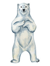Watercolor Cute White Polar Be...