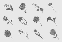 Flower Icons Set - Vector Solid Silhouettes Of Rose, Tulip, Chamomile, Carnation, Iris, Callai, Orchid, Narcissus, Sunflower, Chrysanthemum And Astra For The Site Or Interface