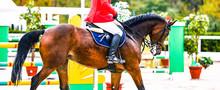 Sorrel Dressage Horse And Ride...