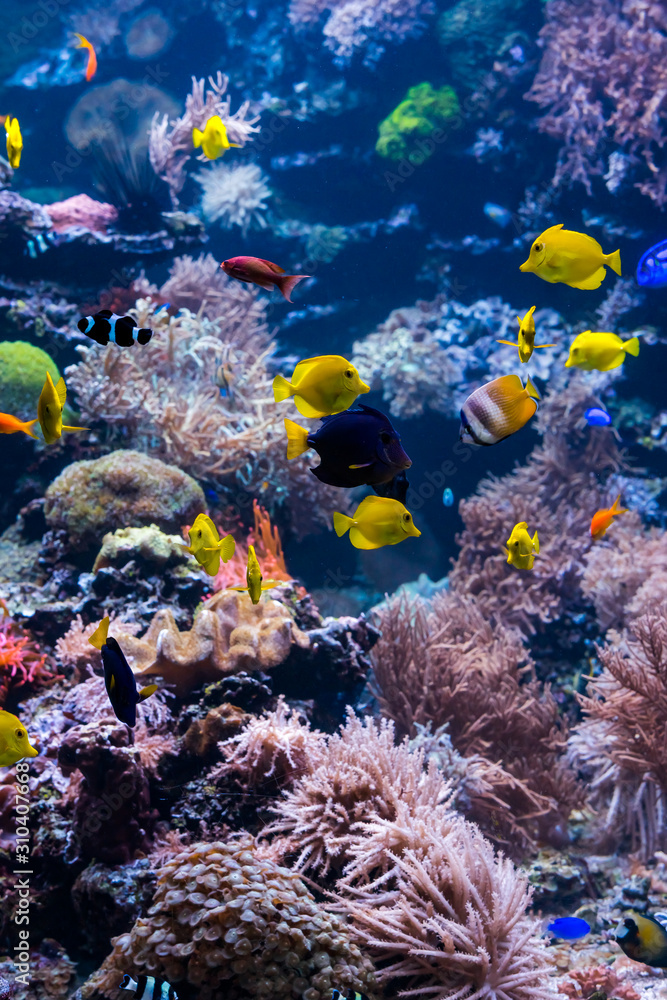 Fototapeta underwater coral reef landscape with colorful fish and marine life